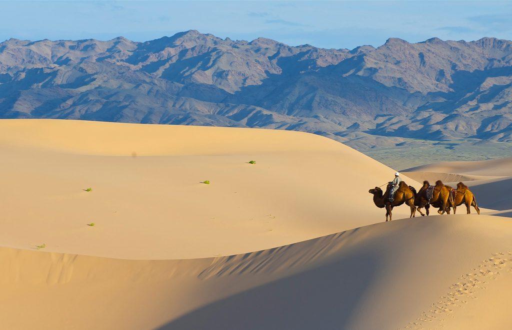 Cammelli – elsen tasarkai – mongolia – eurasian travel