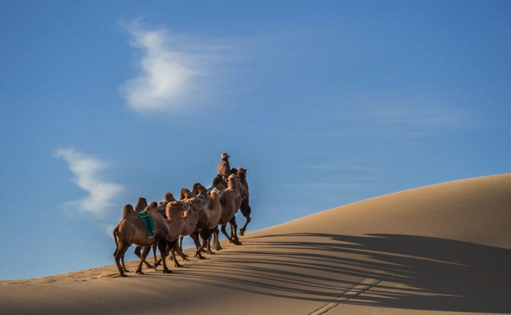 Cammelli – mongolia – elsen tasarkai eurasian travel
