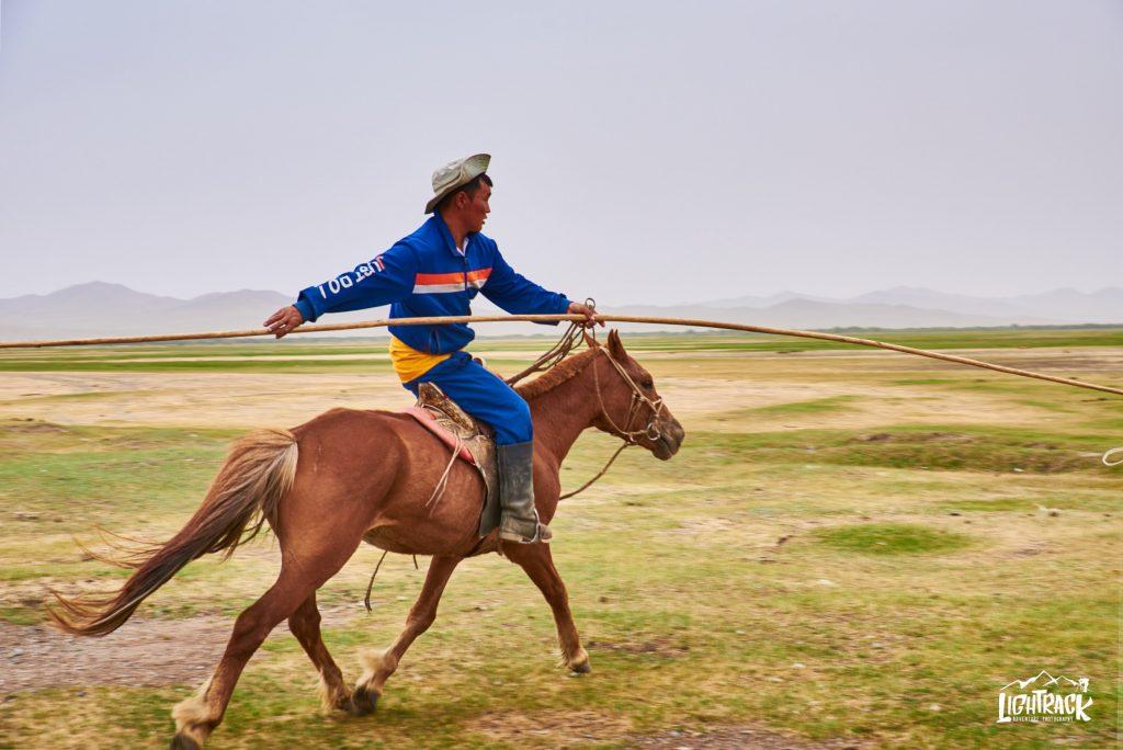 Mongolia-cavalli