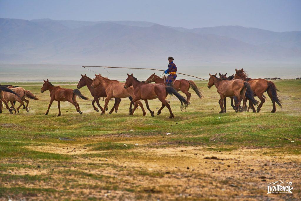 Mongolia-cavalli selvaggi branco