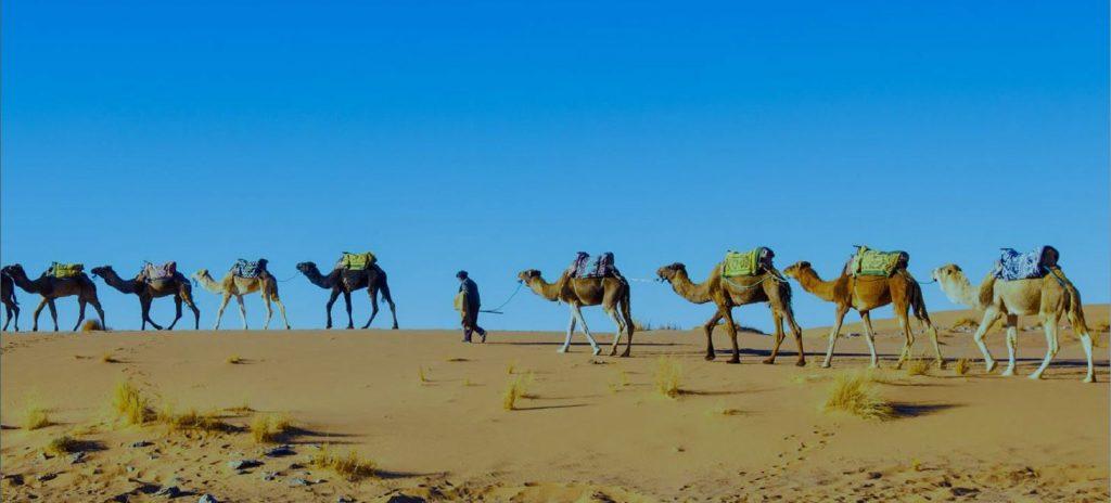 Viaggio in Kazakistan-dromedari