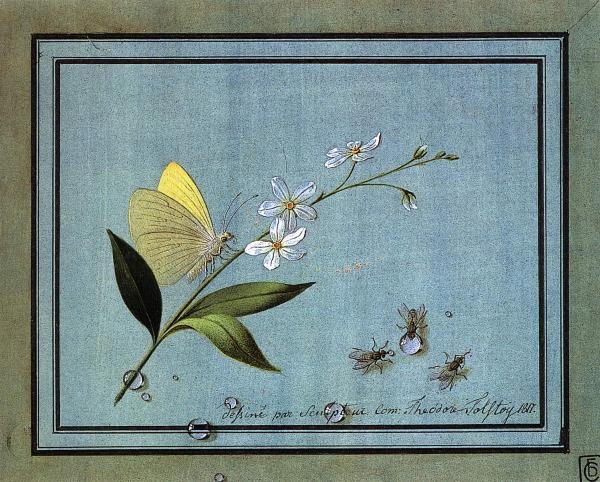 """Opera di Tolstoj, """"Fiore, farfalla e mosche"""" conservata al Museo Russo di San Pietroburgo e anche online sul portale Virtual Russian Museum"""